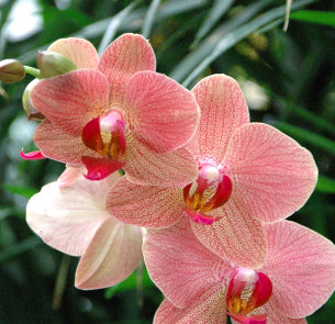 Step into Color at Mahoney's Orchid Festival